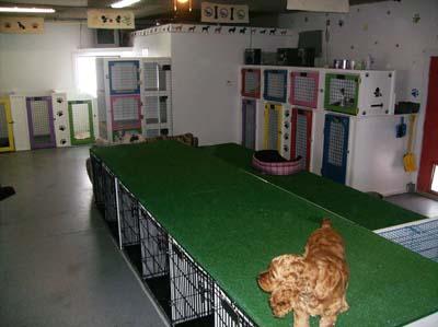 Animal House Dog Cat Boarding